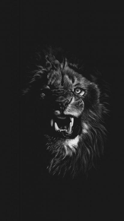Angry Lion iPhone Wallpaper