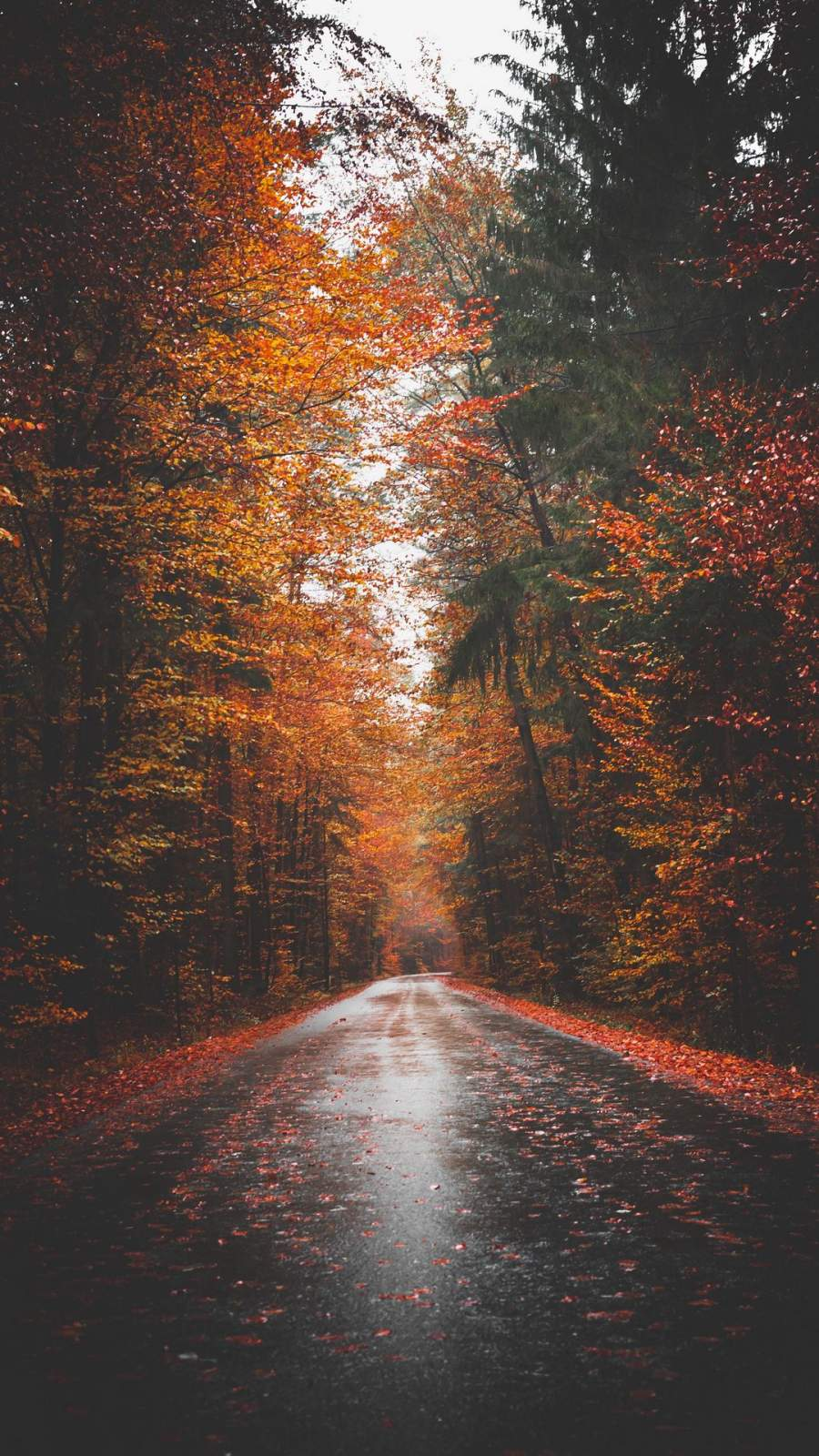 Autumn Forest Road iPhone Wallpaper