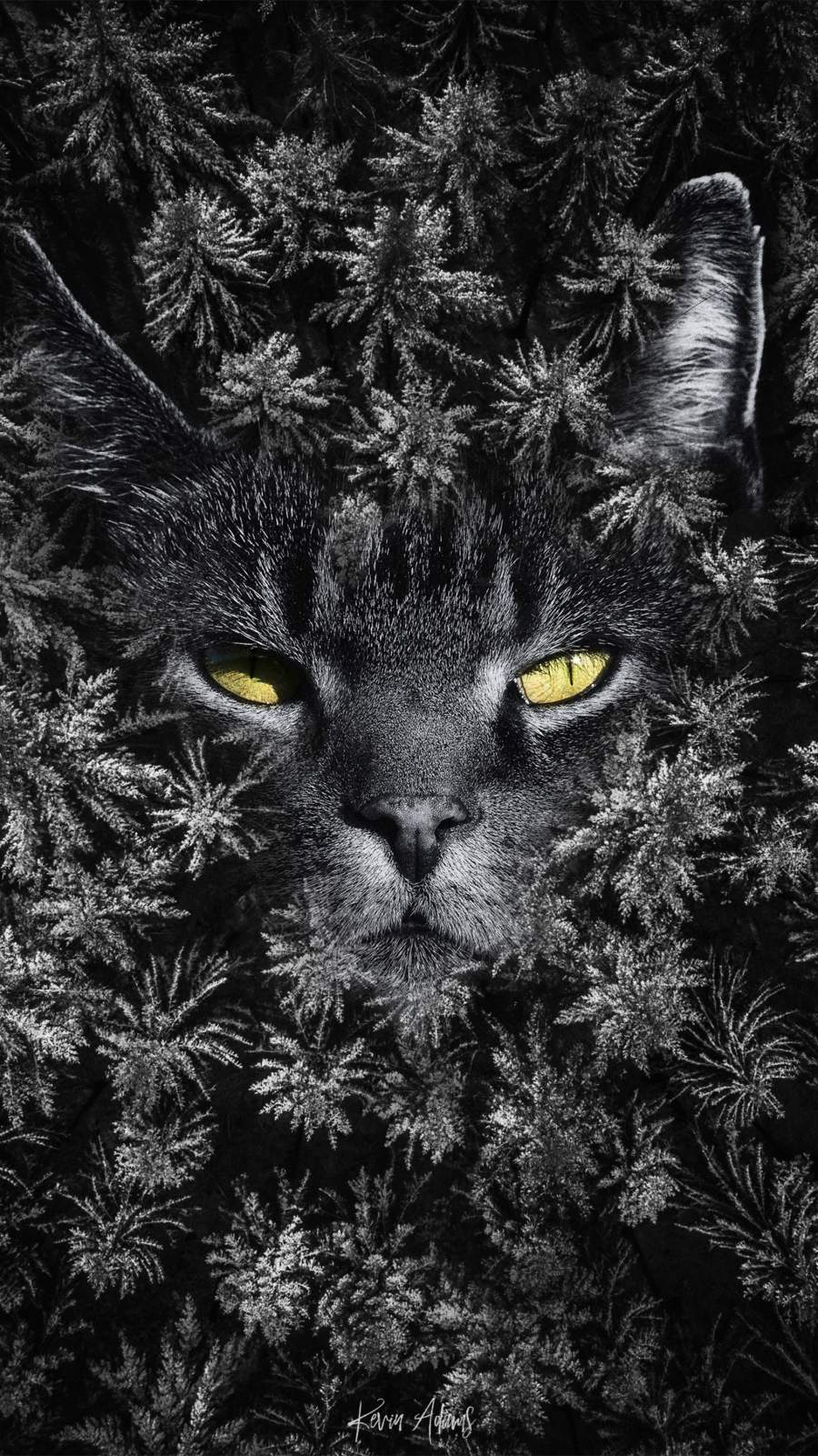 Cat Forest iPhone Wallpaper
