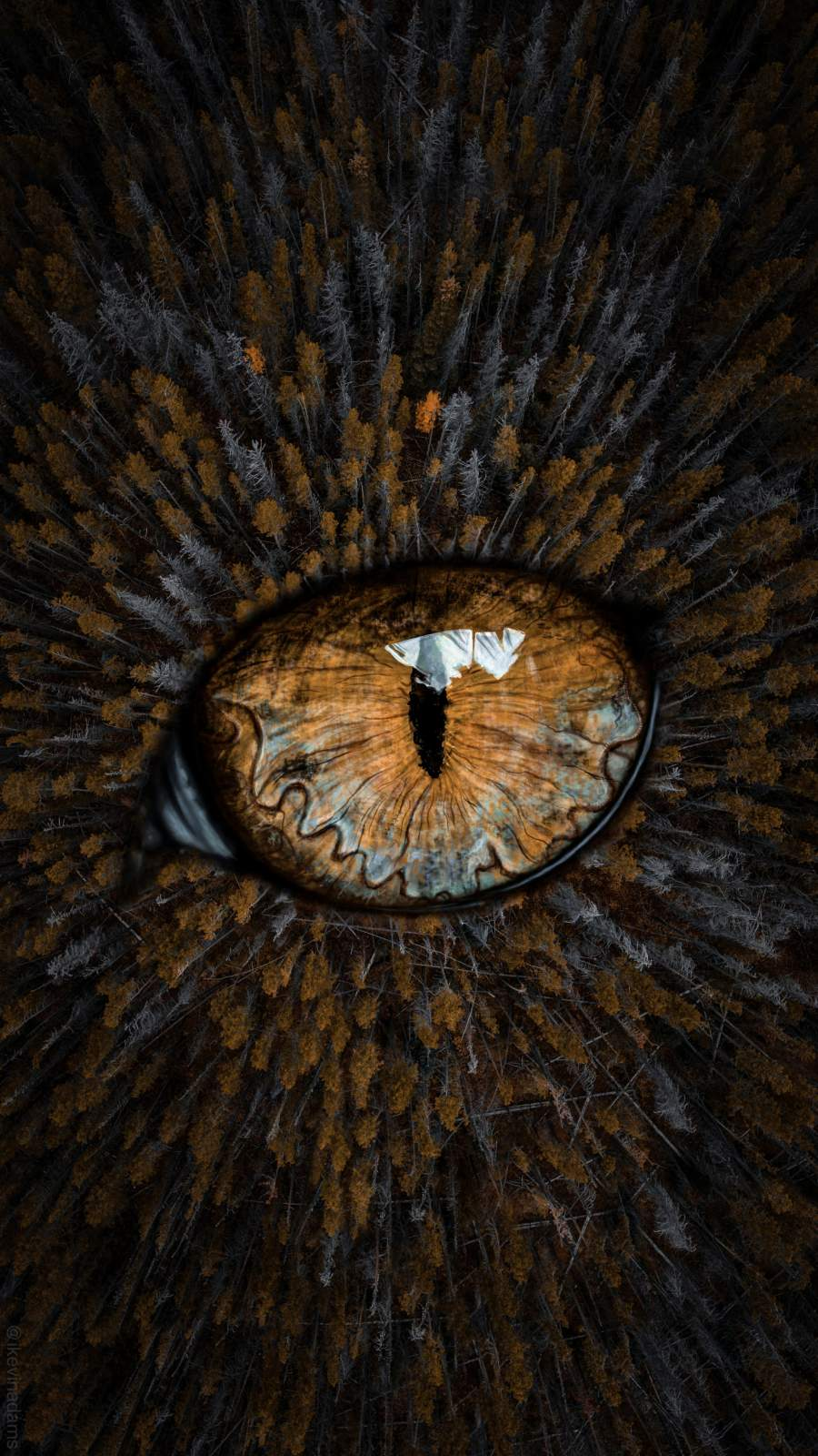 Eye in the Forest iPhone Wallpaper