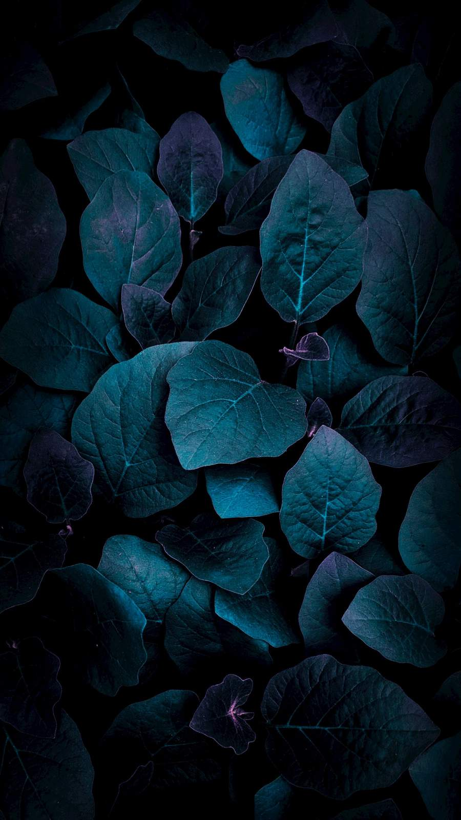 Foliage iPhone Wallpaper