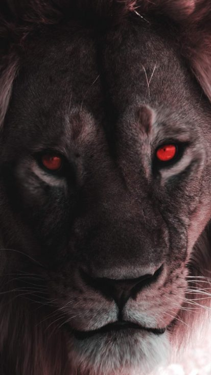Lion Eyes iPhone Wallpaper
