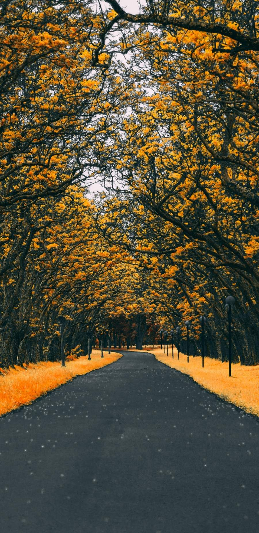 Road Autumn 4K iPhone Wallpaper