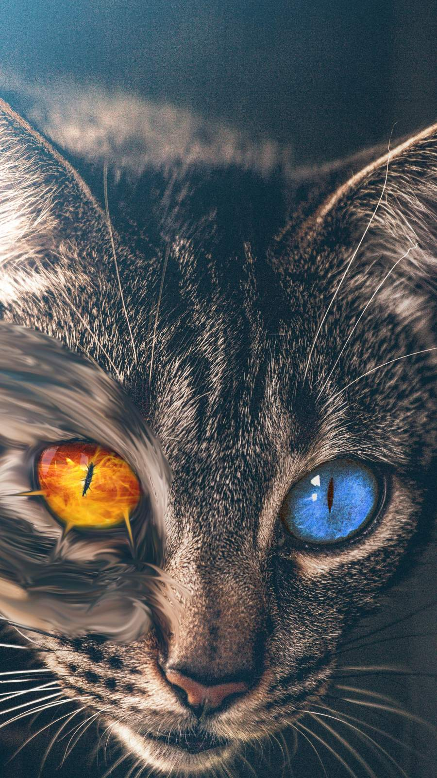 Heterochromia Cat iPhone Wallpaper