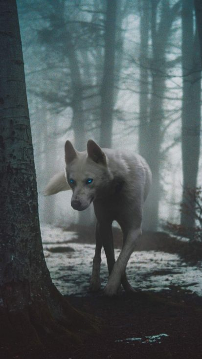 White Wolf iPhone Wallpaper